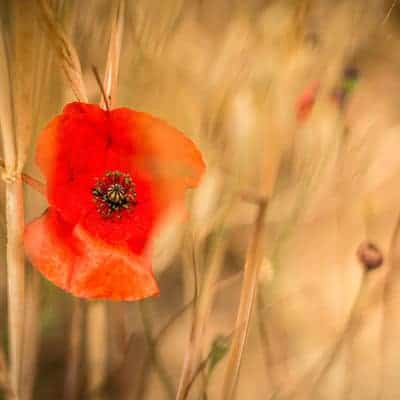 Is There Comfort In The Trenches of Grief?